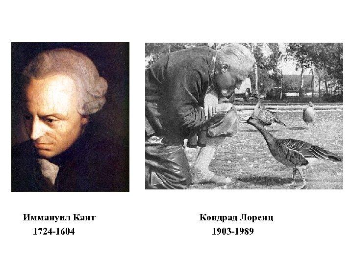 Иммануил Кант 1724 -1604 Кондрад Лоренц 1903 -1989