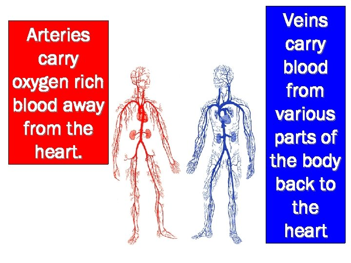 Arteries carry oxygen rich blood away from the heart. Veins carry blood from various