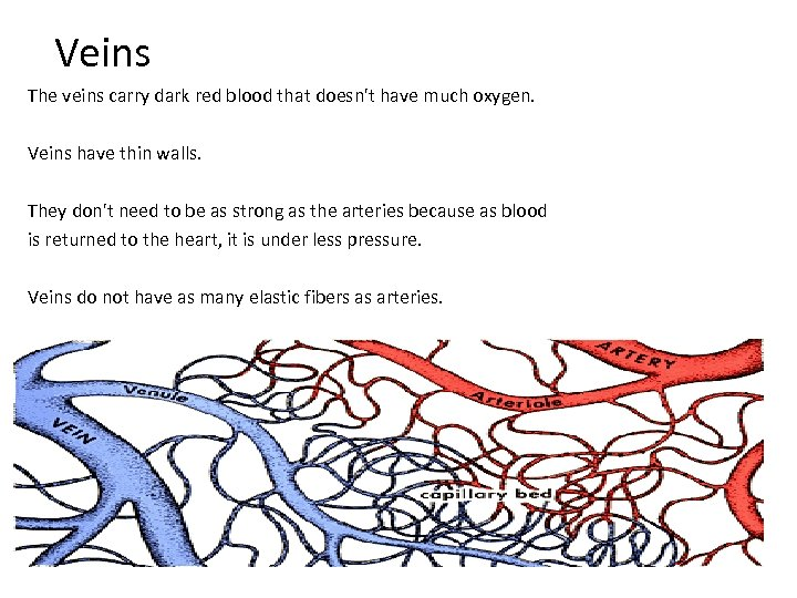 Veins The veins carry dark red blood that doesn't have much oxygen. Veins have
