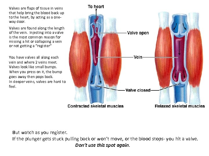 Valves are flaps of tissue in veins that help bring the blood back up