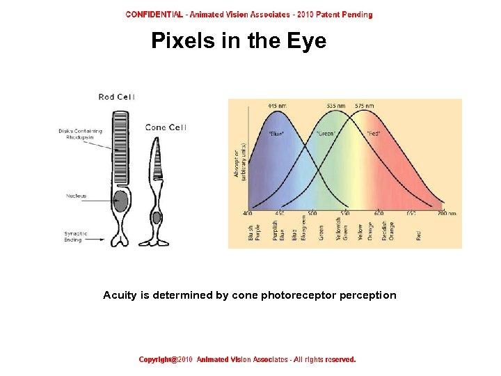 Pixels in the Eye Acuity is determined by cone photoreceptor perception Pixels in the