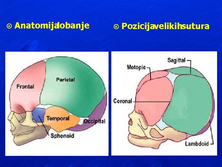 ¤ Anatomija lobanje ¤ Pozicijavelikihsutura