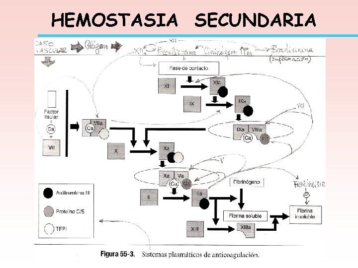 HEMOSTASIA SECUNDARIA