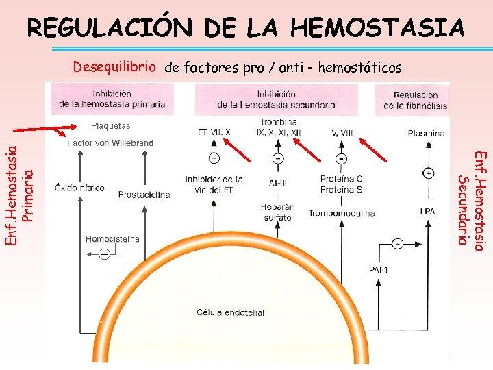 REGULACIÓN DE LA HEMOSTASIA Desequilibrio de factores pro / anti - hemostáticos Equilibrio Factor