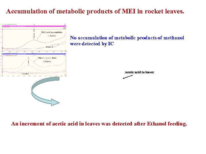 Accumulation of metabolic products of MEI in rocket leaves. No accumulation of metabolic products