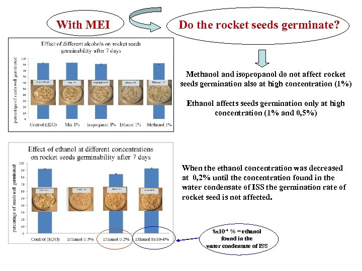 With MEI Do the rocket seeds germinate? Methanol and isopropanol do not affect rocket