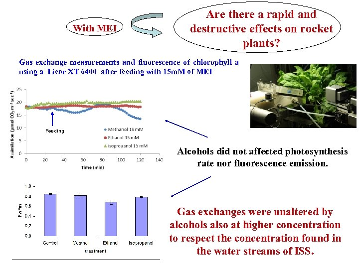 With MEI Are there a rapid and destructive effects on rocket plants? Gas exchange