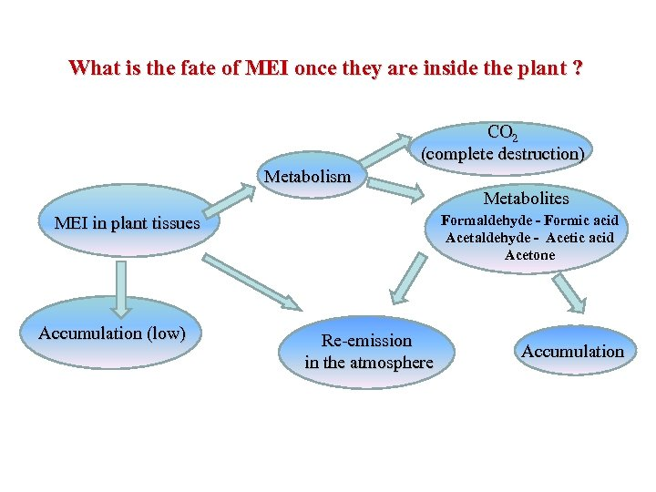 What is the fate of MEI once they are inside the plant ? CO
