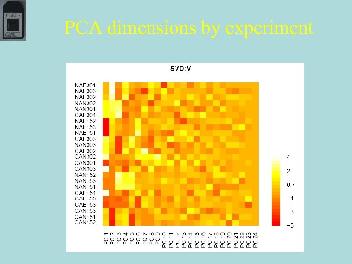 PCA dimensions by experiment