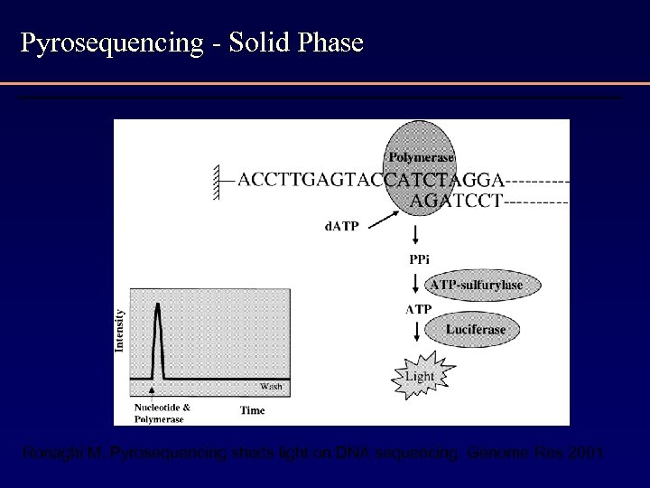 Pyrosequencing - Solid Phase Ronaghi M. Pyrosequencing sheds light on DNA sequencing. Genome Res