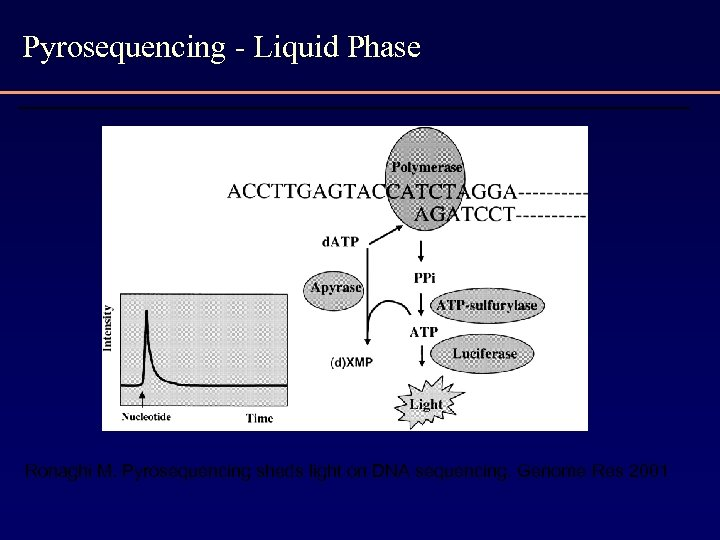 Pyrosequencing - Liquid Phase Ronaghi M. Pyrosequencing sheds light on DNA sequencing. Genome Res