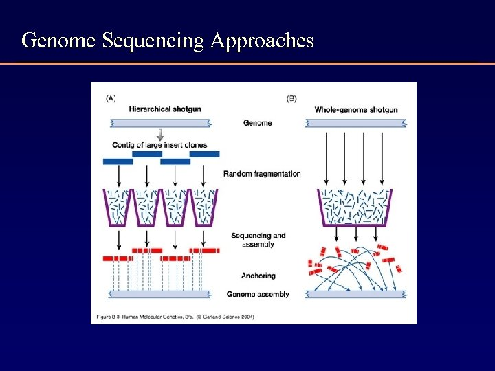 Genome Sequencing Approaches