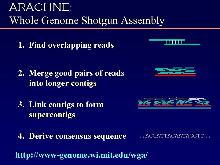 ARACHNE: Whole Genome Shotgun Assembly 1. Find overlapping reads 2. Merge good pairs of