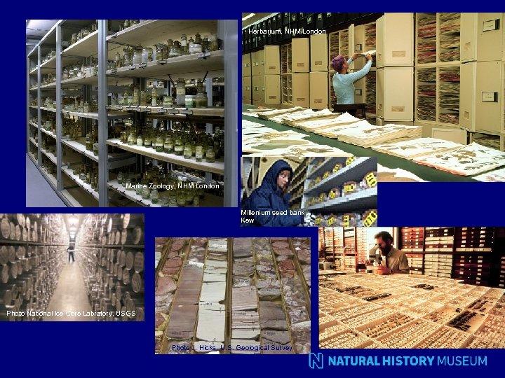 Herbarium, NHM London Marine Zoology, NHM London Millenium seed bank Kew Photo National Ice