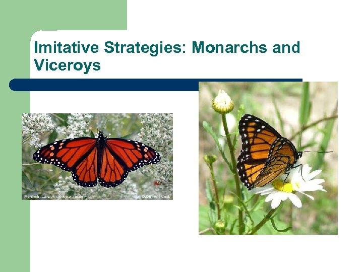 Imitative Strategies: Monarchs and Viceroys