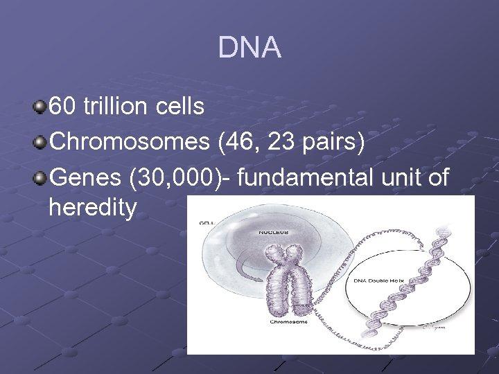 DNA 60 trillion cells Chromosomes (46, 23 pairs) Genes (30, 000)- fundamental unit of