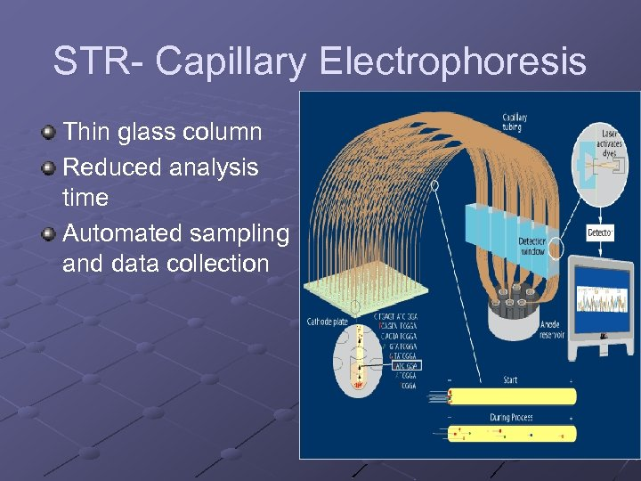 STR- Capillary Electrophoresis Thin glass column Reduced analysis time Automated sampling and data collection