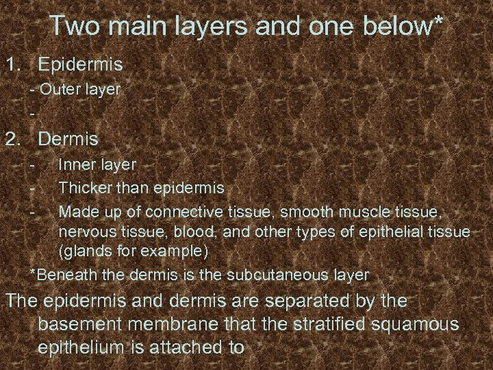 Two main layers and one below* 1. Epidermis - Outer layer - 2. Dermis