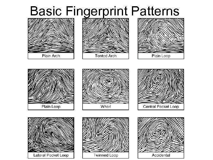 Basic Fingerprint Patterns