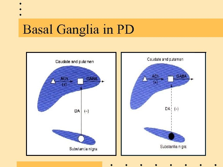 Basal Ganglia in PD