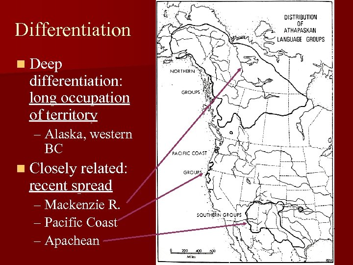 Differentiation n Deep differentiation: long occupation of territory – Alaska, western BC n Closely