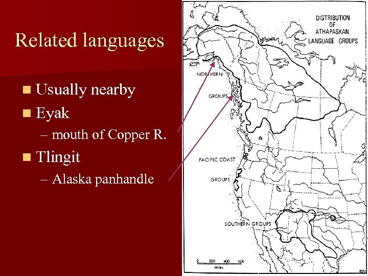 Related languages n Usually nearby n Eyak – mouth of Copper R. n Tlingit