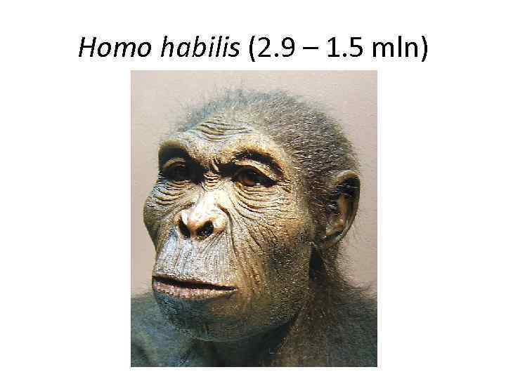 essay on homo habilis Human evolution essay tanzania homo habilis h habilis existed between 24 and 15 million years ago it was thought to have used tools the face is still primitive but it projects less than a africanus.
