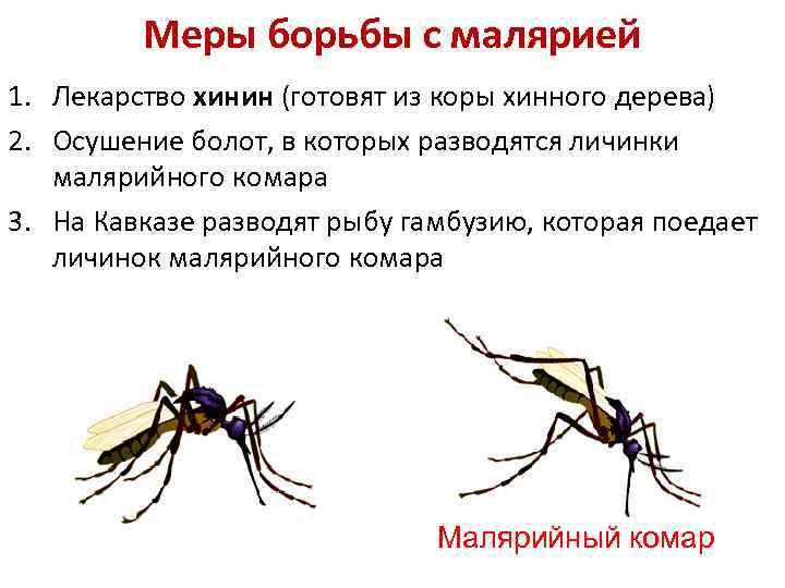 Меры борьбы с малярией 1. Лекарство хинин (готовят из коры хинного дерева) 2. Осушение
