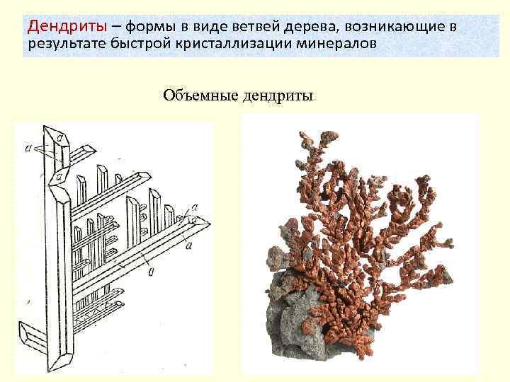 Дендриты – формы в виде ветвей дерева, возникающие в результате быстрой кристаллизации минералов Объемные