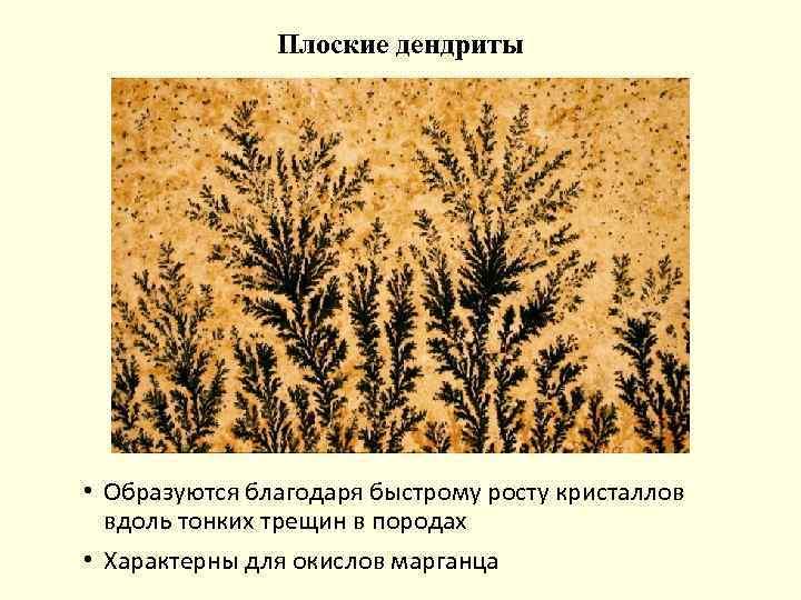 Плоские дендриты • Образуются благодаря быстрому росту кристаллов вдоль тонких трещин в породах •