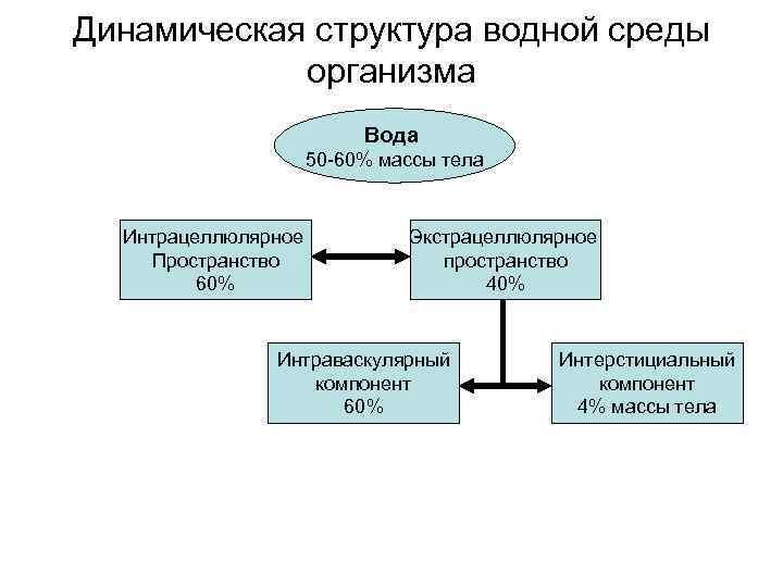 Динамическая структура водной среды организма Вода 50 -60% массы тела Интрацеллюлярное Пространство 60% Экстрацеллюлярное