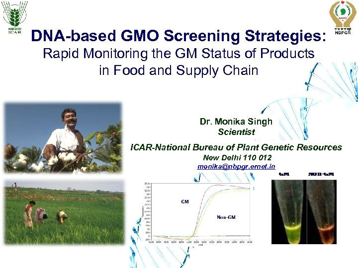 DNA-based GMO Screening Strategies: Rapid Monitoring the GM Status of Products in Food and