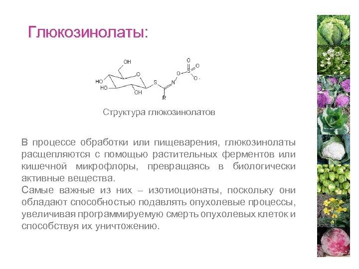Глюкозинолаты: Структура глюкозинолатов В процессе обработки или пищеварения, глюкозинолаты расщепляются с помощью растительных ферментов