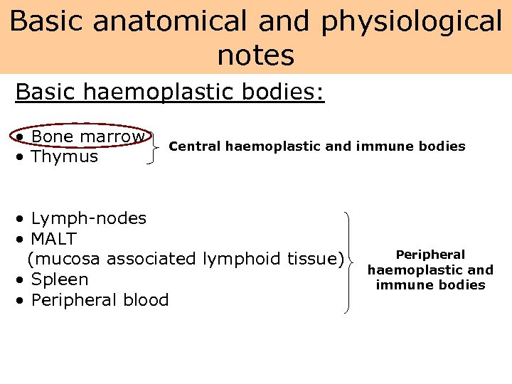 Basic anatomical and physiological notes Basic haemoplastic bodies: • Bone marrow • Thymus Central