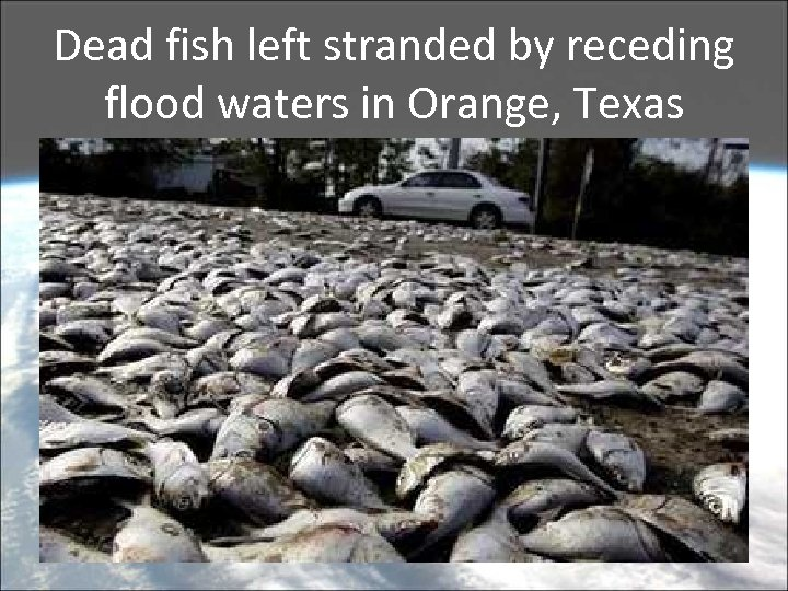Dead fish left stranded by receding flood waters in Orange, Texas
