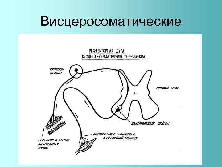 Висцеросоматические