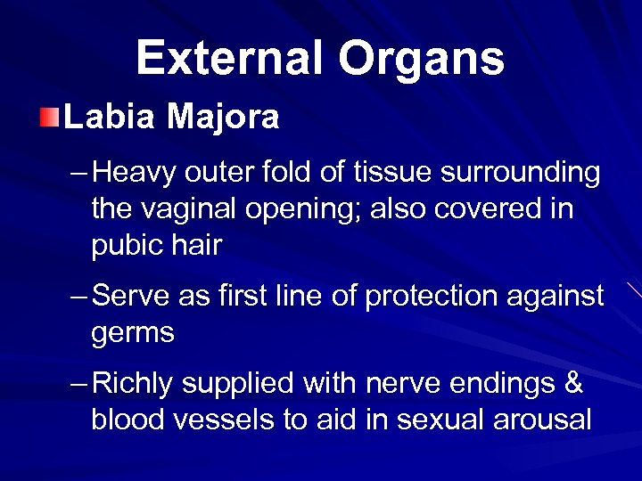External Organs Labia Majora – Heavy outer fold of tissue surrounding the vaginal opening;