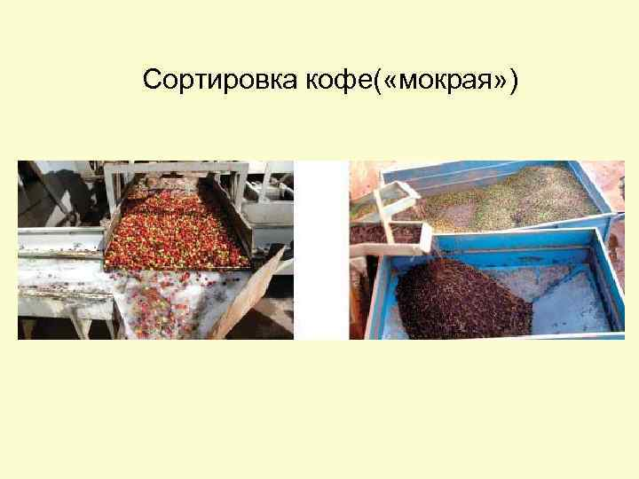 Сортировка кофе( «мокрая» )