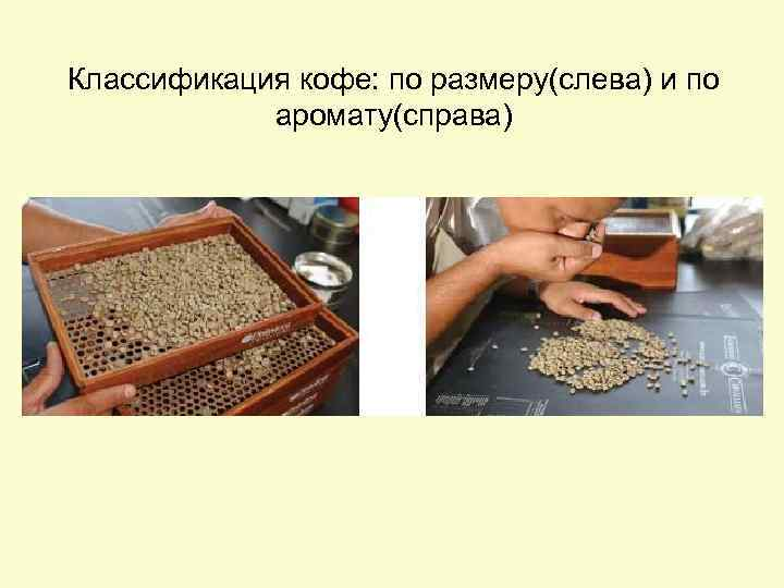 Классификация кофе: по размеру(слева) и по аромату(справа)