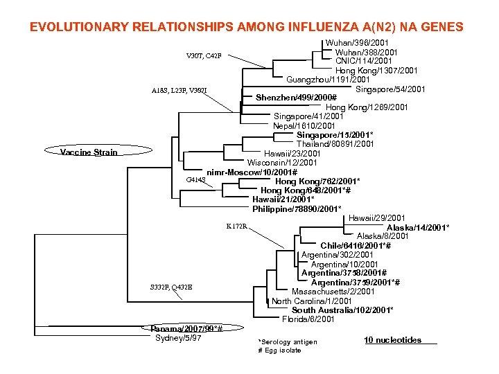 EVOLUTIONARY RELATIONSHIPS AMONG INFLUENZA A(N 2) NA GENES Vaccine Strain Wuhan/396/2001 Wuhan/388/2001 V 30
