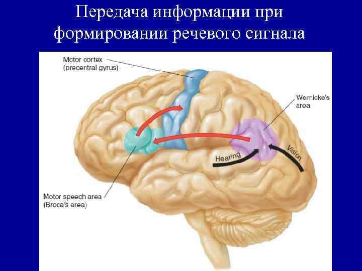 Передача информации при формировании речевого сигнала