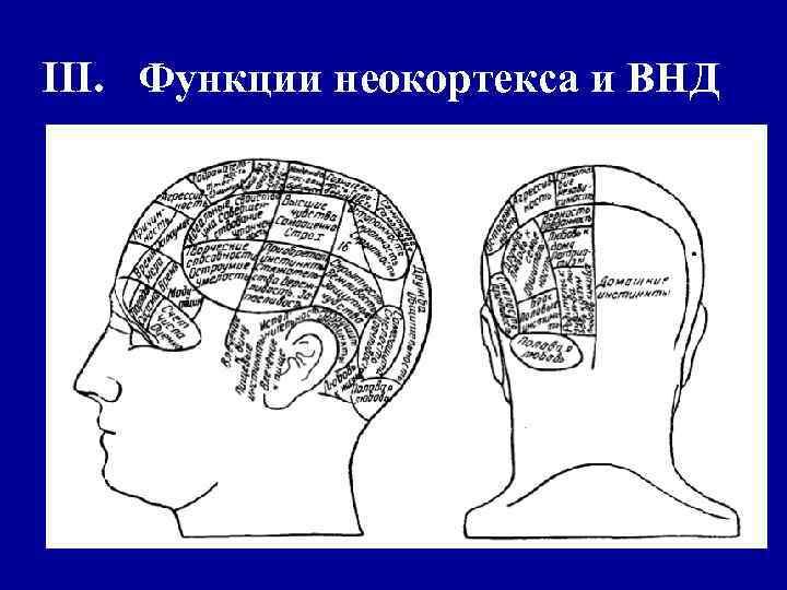 III. Функции неокортекса и ВНД
