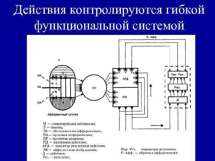 Действия контролируются гибкой функциональной системой