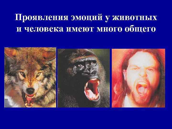 Проявления эмоций у животных и человека имеют много общего