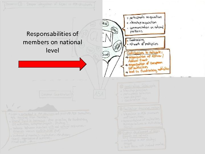 Responsabilities of members on national level