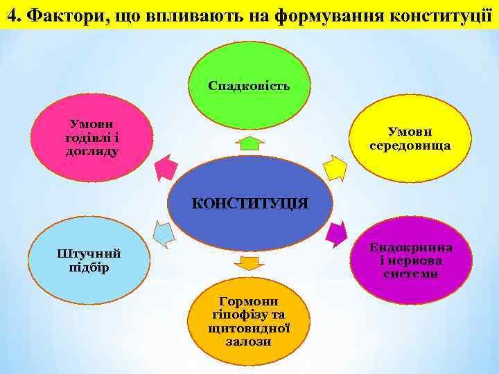 4. Фактори, що впливають на формування конституції Спадковість Умови годівлі і догляду Умови середовища