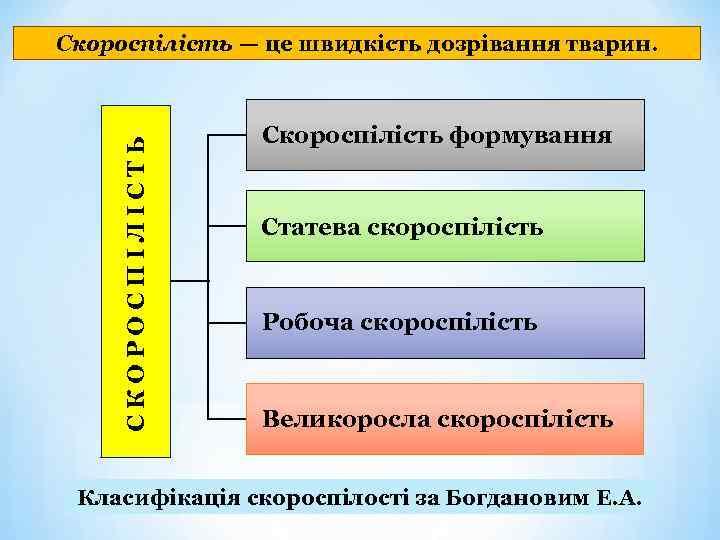 СКОРОСПІЛІСТЬ Скороспілість — це швидкість дозрівання тварин. Скороспілість формування Статева скороспілість Робоча скороспілість Великоросла