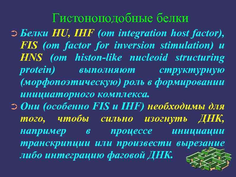 Гистоноподобные белки ➲ Белки HU, IHF (от integration host factor), FIS (от factor for