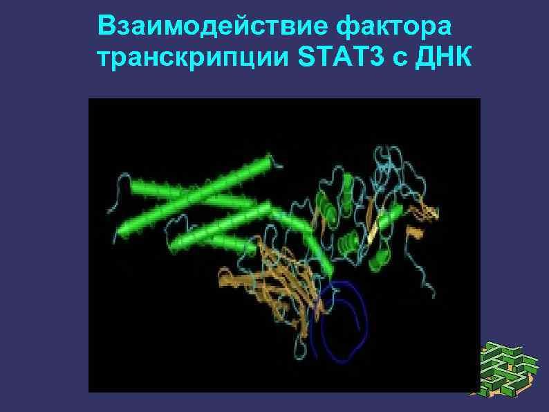 Взаимодействие фактора транскрипции STAT 3 с ДНК