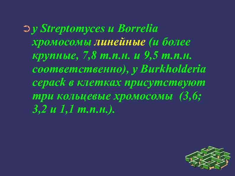 ➲у Streptomyces и Borrelia хромосомы линейные (и более крупные, 7, 8 т. п. н.